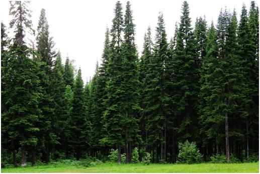 Основные виды древесины, с которыми мы работаем